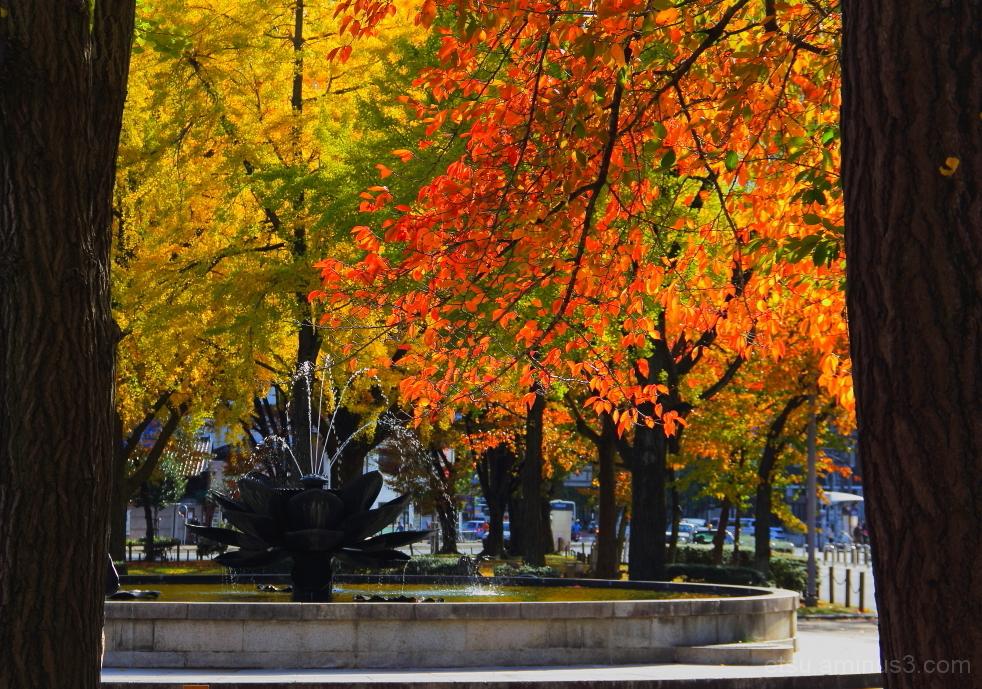Enjoy colors !! 東本願寺前