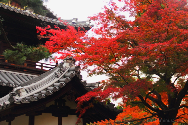 At a famous temple 建仁寺