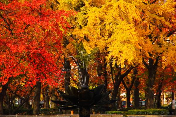 Enjoy colors 東本願寺前