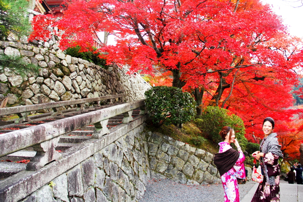 Kimono ladies with red leaves 清水寺