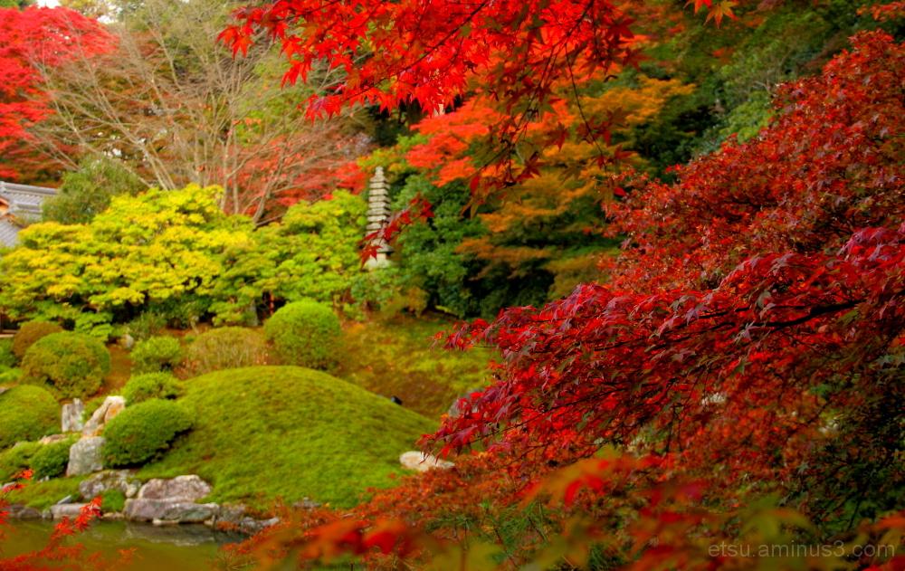 Colorful garden 青蓮院