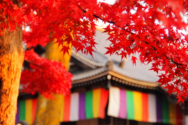 Near a mainhall of a temple 智積院