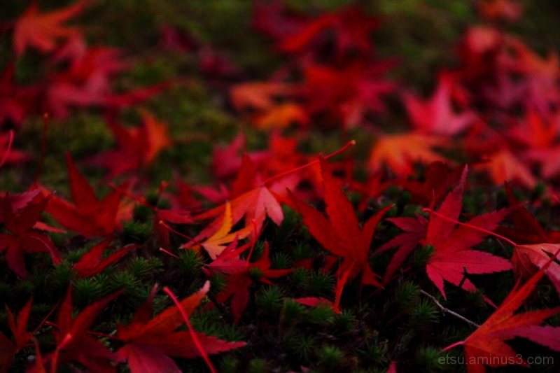 Red and green(at a temple) 智積院