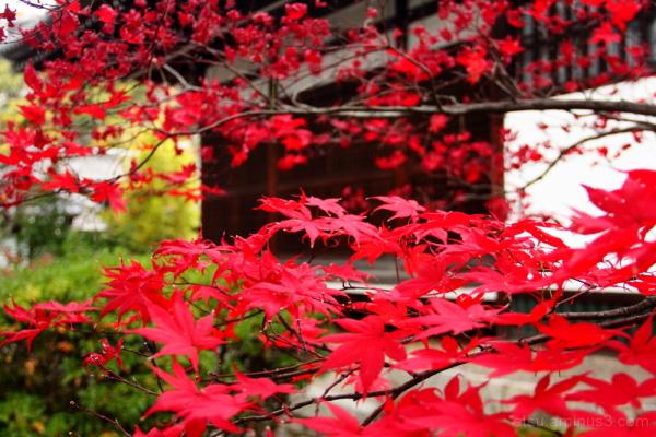 We're still red 蘆山寺