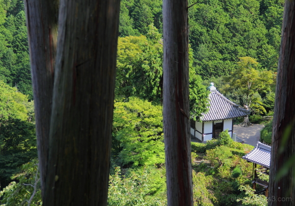 In the green(at a temple) 善峯寺