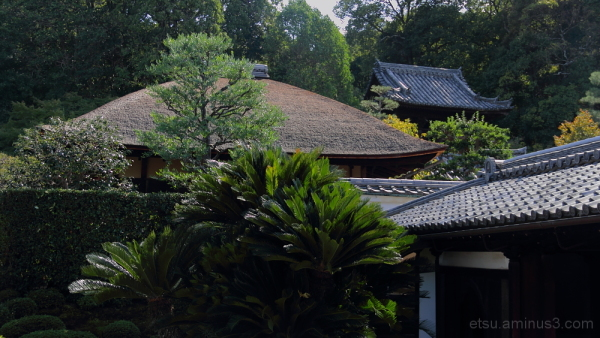 Seeing a garden from the inside 一休寺