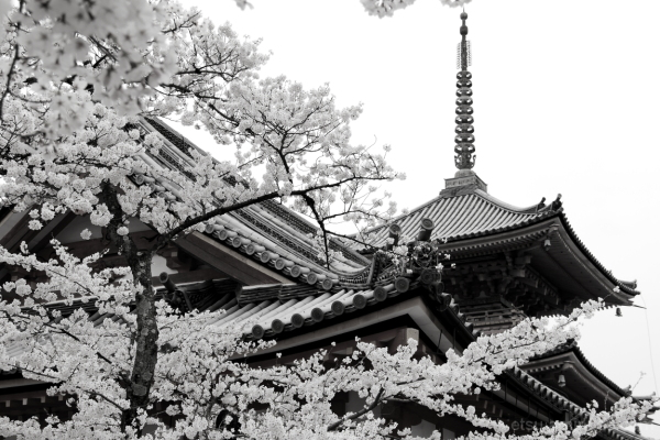 At a famous temple #B&W version 清水寺