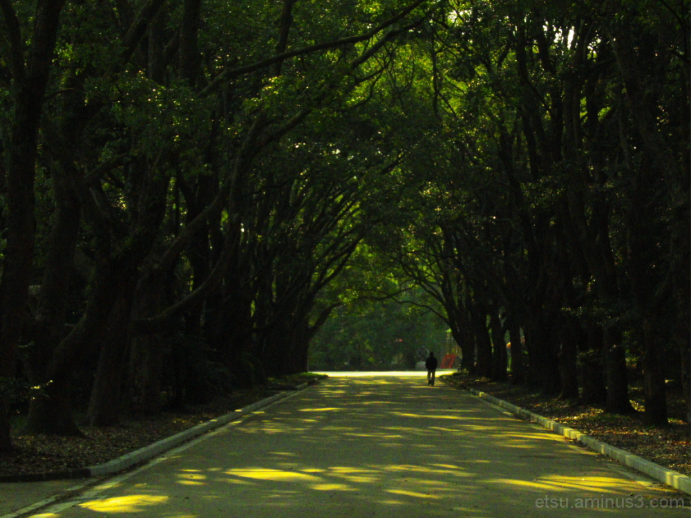 The green tunnel 植物園