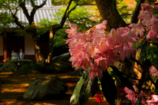 Toward evening (at a garden of a temple) 圓光寺