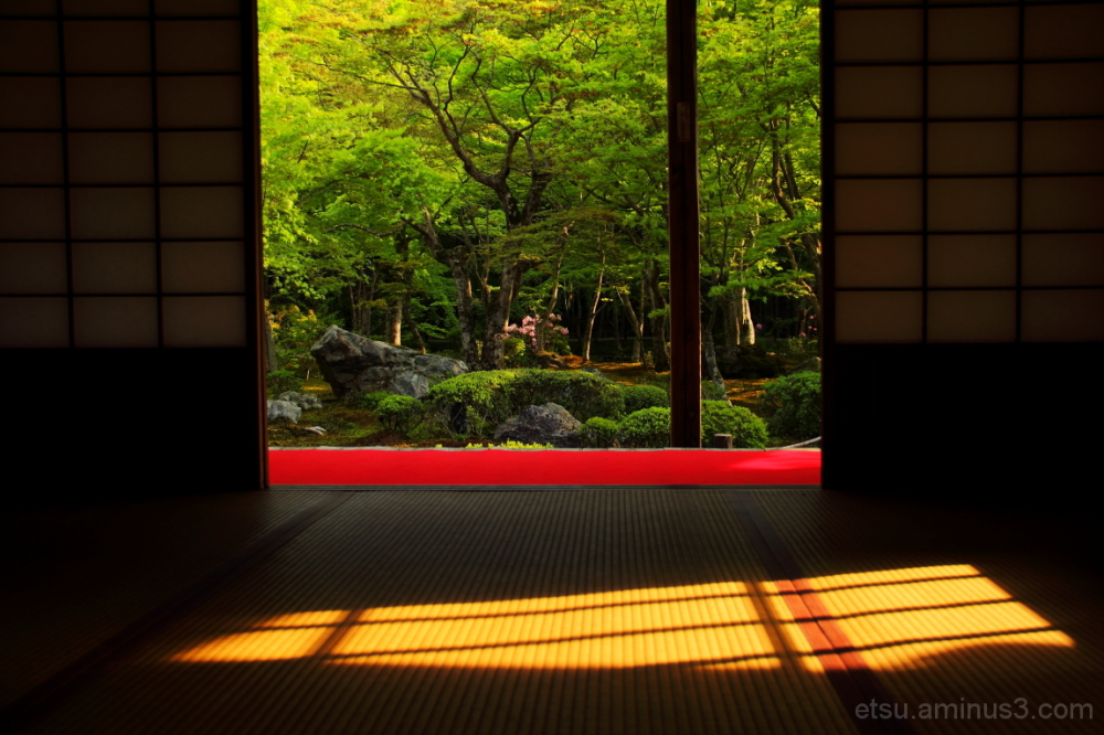 The sunlight is shining onto..... 圓光寺