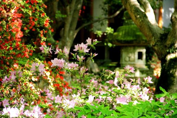 At a garden 青蓮院