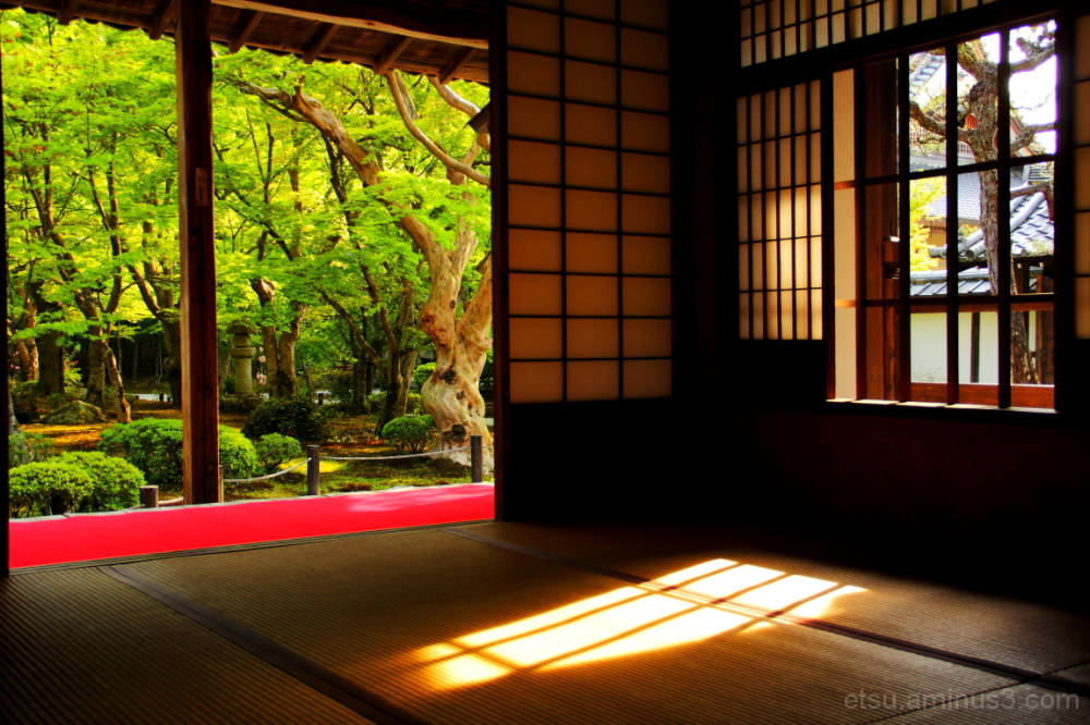 Seeing the garden from the inside 圓光寺