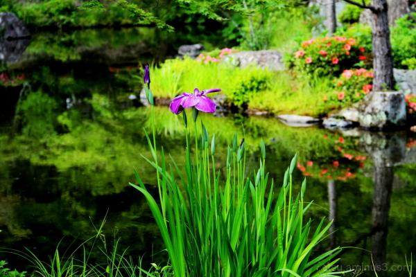 Flowers tell us something..... 等持院