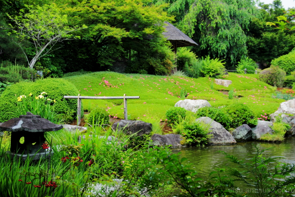 A beautiful day (at a garden) 退蔵院