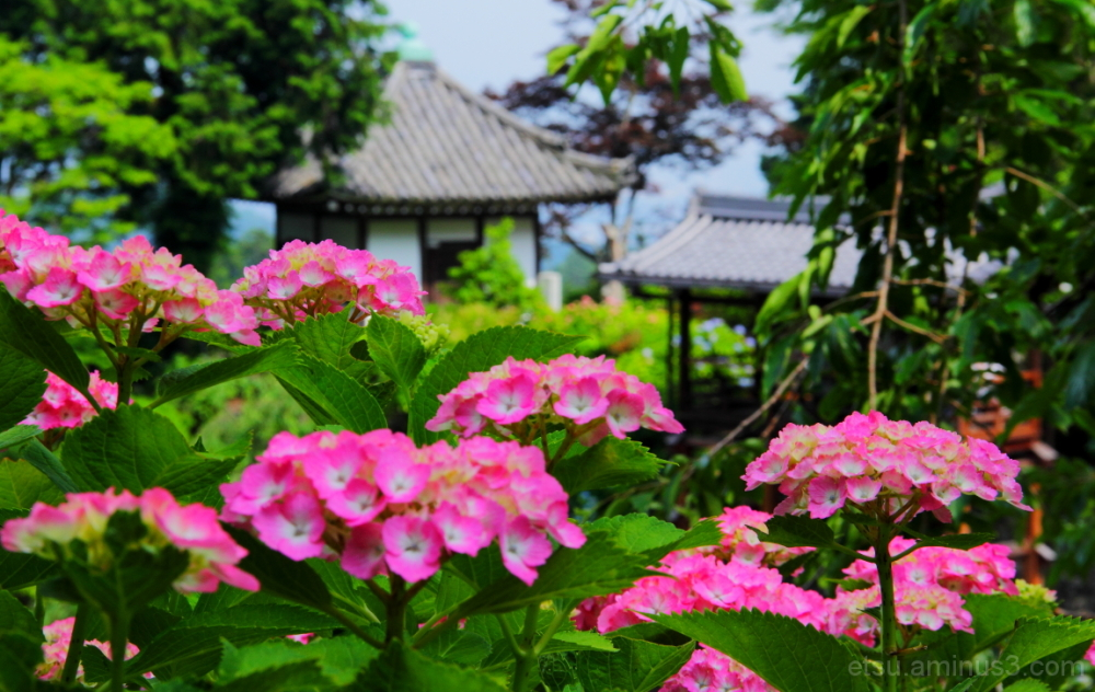 We're happy to see you..... 善峯寺