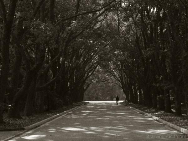 Taking a walk there..... 植物園