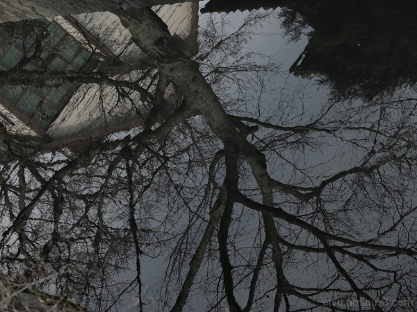 Reflections 哲学の道