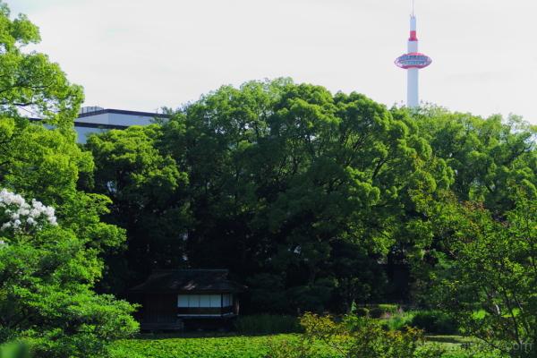 Old and new 枳殻邸と京都タワ-
