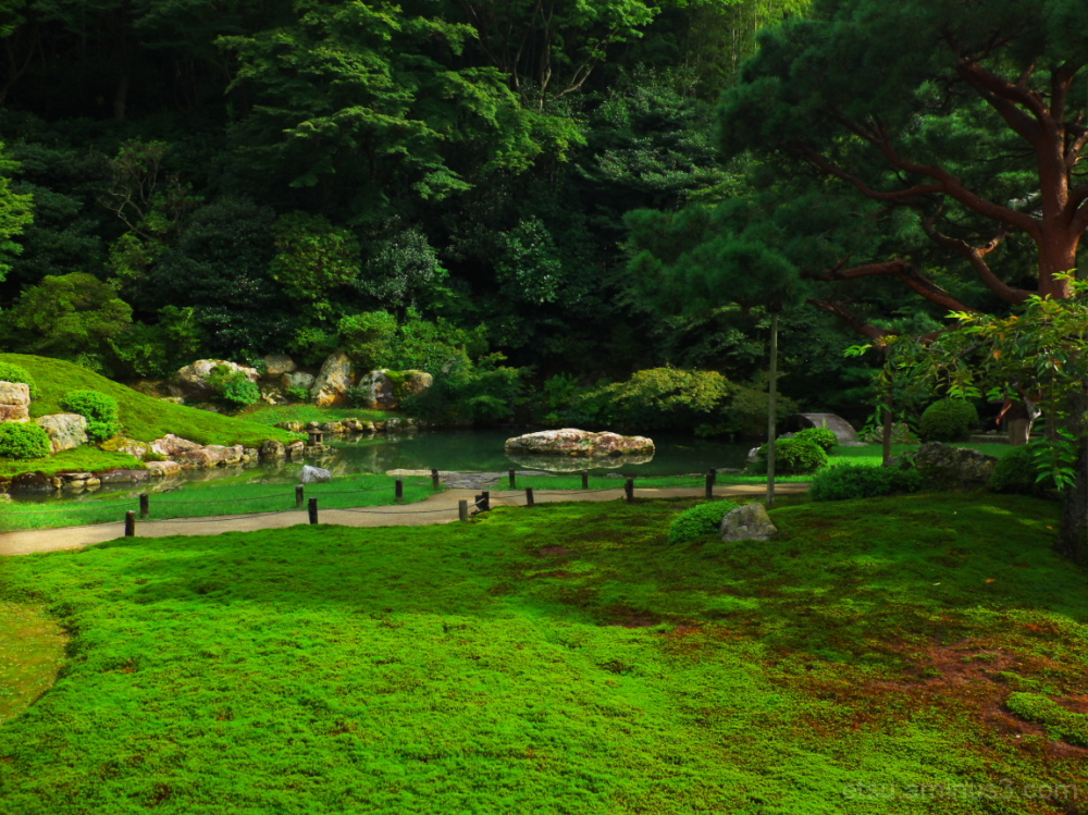 Lush green (at a temple) 青蓮院