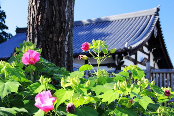 Beautiful flowers..... 相国寺