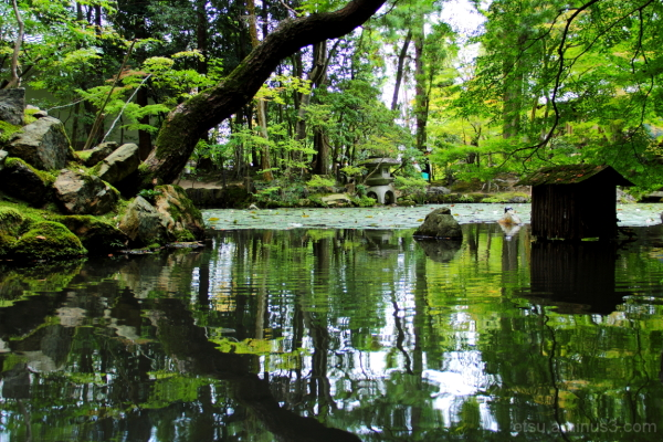 Amazing pond...... 天授庵