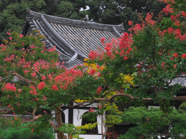 Blooming flowers with a hall..... 高台寺