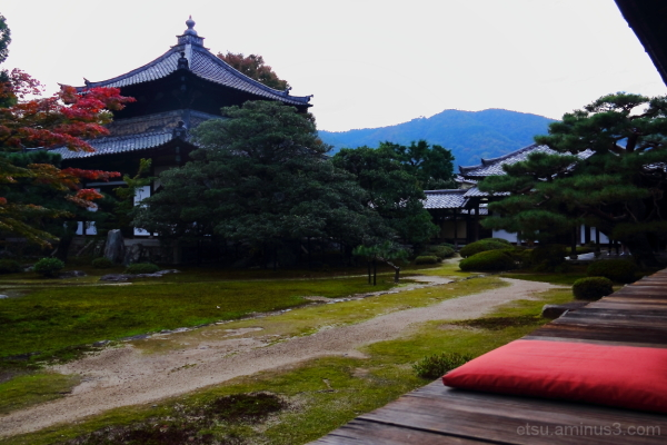 For me, this is a time of bliss......... 鹿王院、