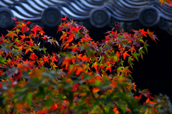 In a profusion of colors....... 青蓮院