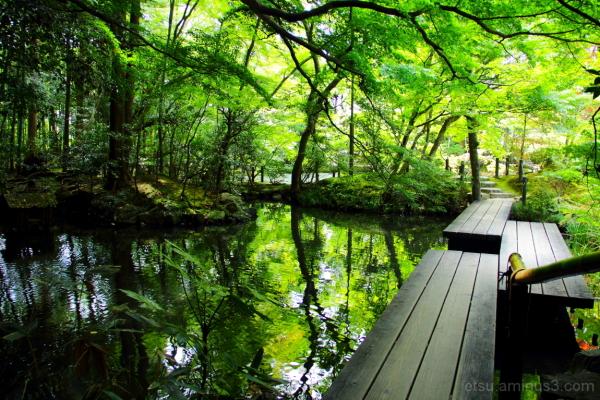 Amazing pond......