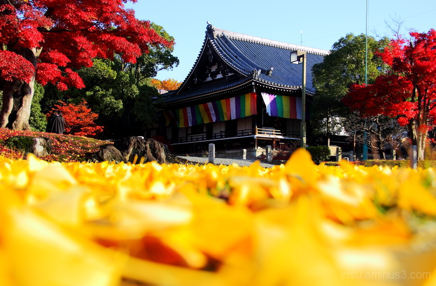 As if I'd being in the colorful world....... 智積院