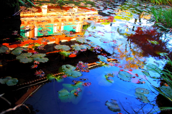 Another world in the pond ?............ 智積院