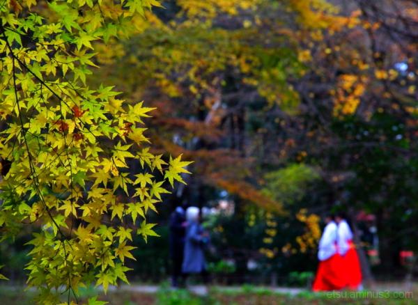 An autumn day at the shrine....... 下鴨神社