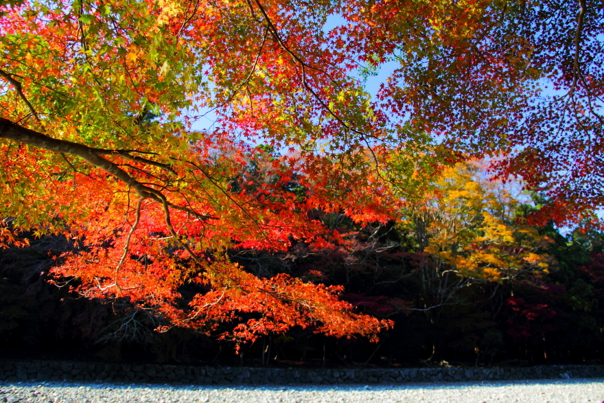 Autumn colors at the Ise shrine 伊勢