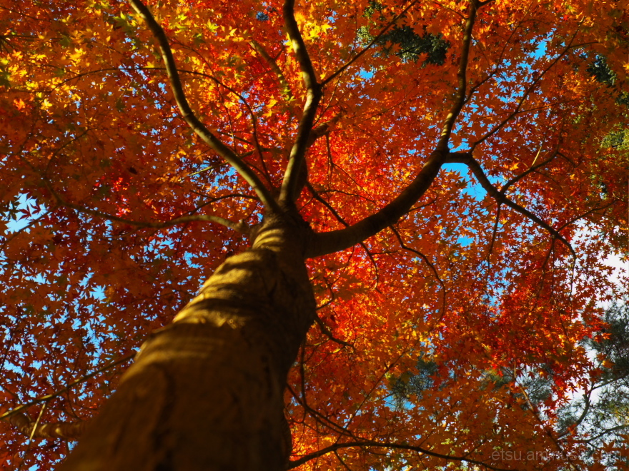 Looking up the tree.........