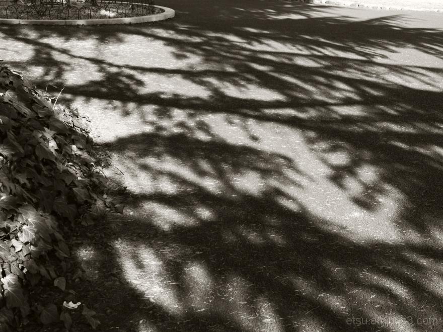 Shadows.........