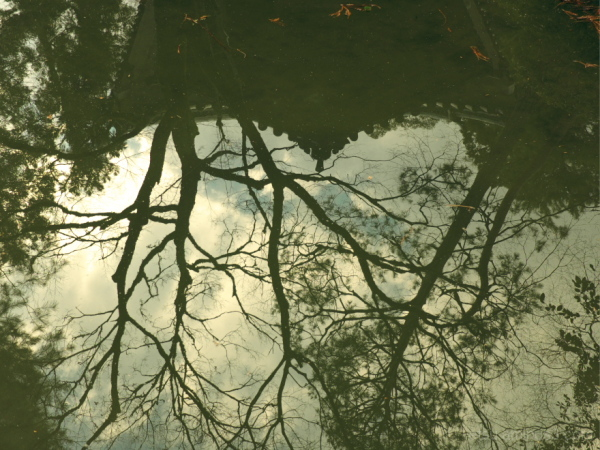 Reflections........