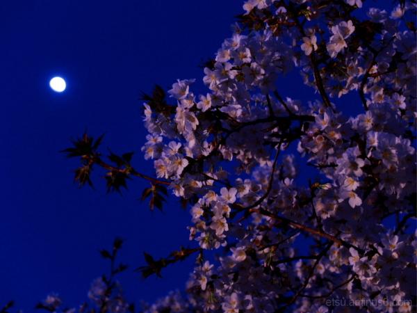 The full moon is seeing blooming flowers......