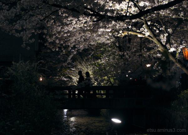 Walking under cherry blossoms.......