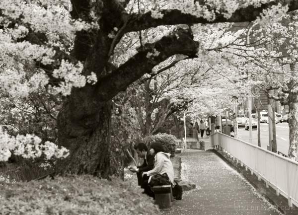 Under blooming flowers.........