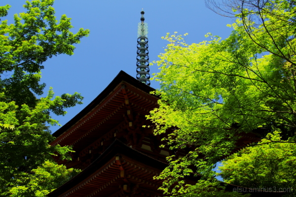 A pagoda is seeing green leaves.......