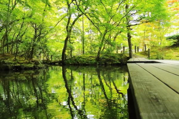 The quiet place...........