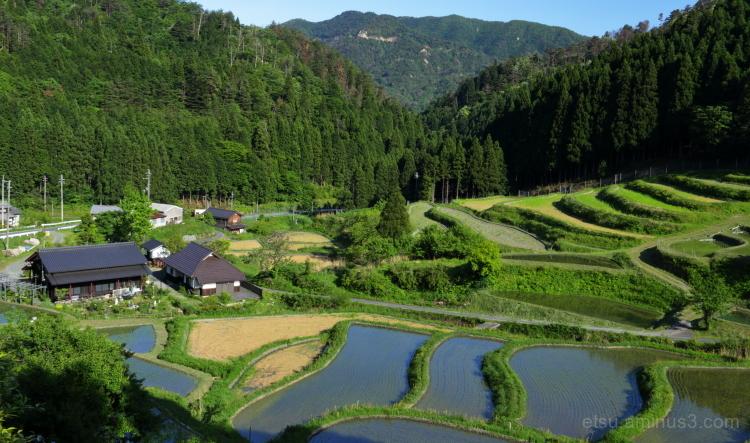 Terraced rice fields..............