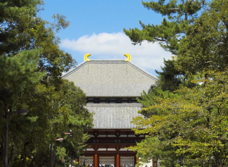 Between trees (in Nara)