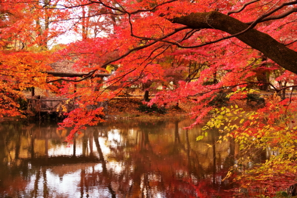 Colorful world.................