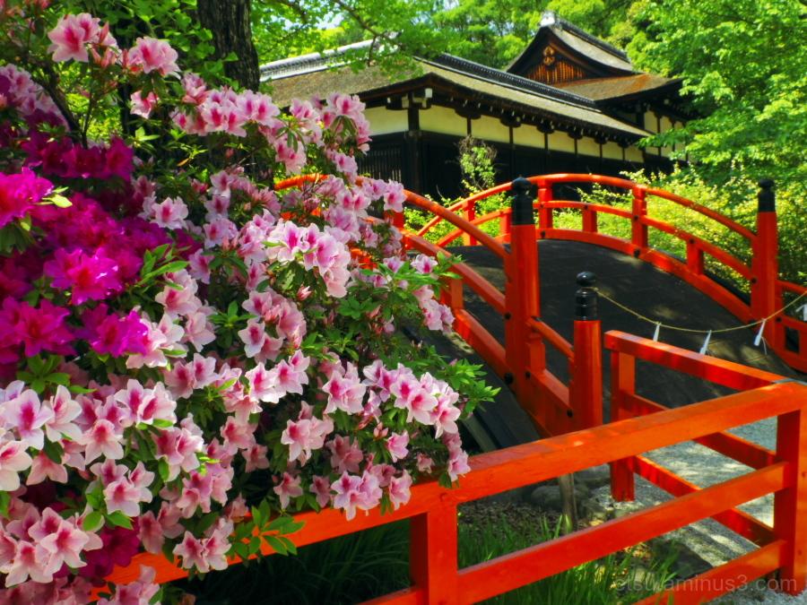 At the shrine.................