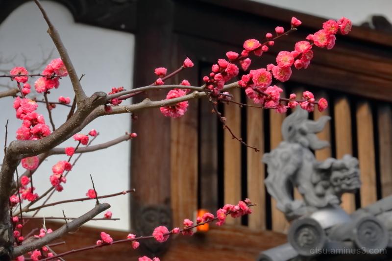 The seasonal flower...............