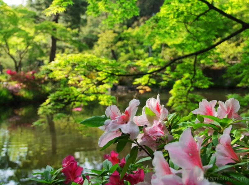 Full bloom...............