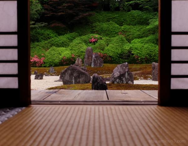 The dry garden...............