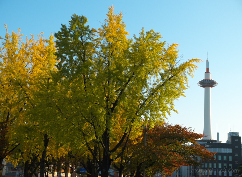 Ginkgo with the Kyoto tower