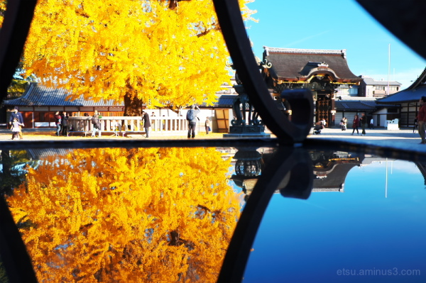 Dual images of ginkgo..........